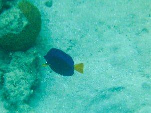 Snorkeling Aqaba