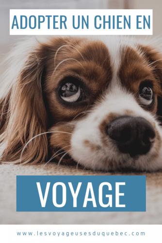 Guide pour ramener un chien au Canada : adopter un chien à l'étranger