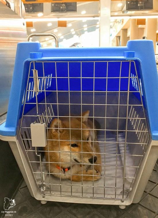 Mon chien adopté à l'étranger dans sa cage pour le vol vers le Canada dans notre article sur Adopter un chien en voyage : Procédures pour ramener un chien au Canada #chien #adopter #etranger #voyage #procedure