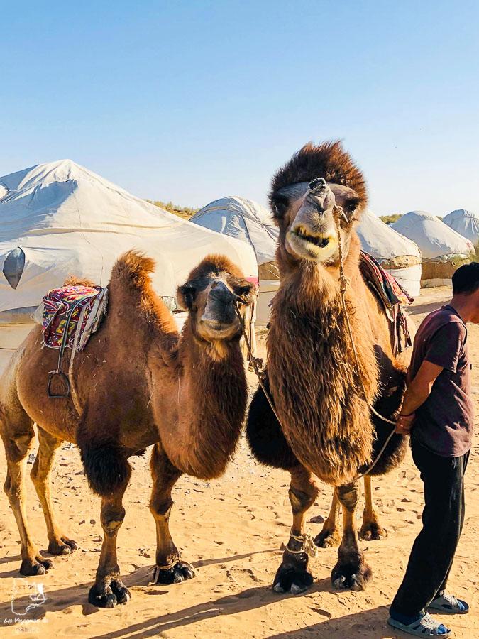 Faire du chameau dans le désert du Kyzyl Koum sur la liste de que faire en Ouzbékistan dans notre article Visiter l'Ouzbékistan : 7 incontournables à voir lors d'un voyage en Ouzbékistan #ouzbekistan #asiecentrale #routedelasoie #voyage #desert #kyzylkoum #chameau