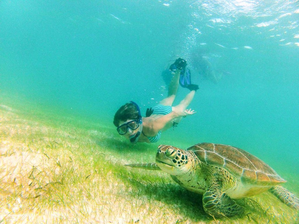 Plongée sous-marine avec des tortues au Mexique dans notre article Plongée sous-marine : 20 destinations de plongée à travers le monde #plongee #plongeesousmarine #voyage #destination