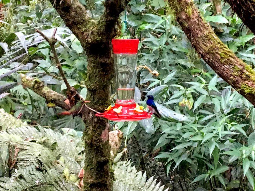 Observation de colibris à Mindo en Équateur dans notre article Mindo en Équateur : Que faire et voir dans ce lieu à la faune et la flore unique #equateur #mindo #ameriquedusud #voyage