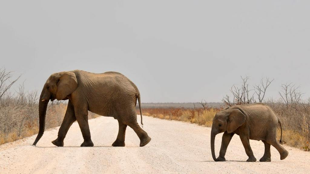 La Namibie, une destination road trip originale dans notre article Organiser un road trip entre filles : 12 destinations pour faire un road trip au féminin #roadtrip #voyage #voyageraufeminin #inspirationvoyage
