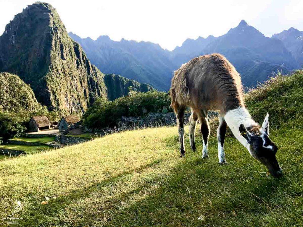 Machu Picchu, l'aboutissement du trek sur l'Inca jungle trail dans notre article Randonnée sur l'Inca jungle trail : Mon trek au Machu Picchu en famille #randonnee #trek #incajungletrail #machupicchu #perou #ameriquedusud #unesco