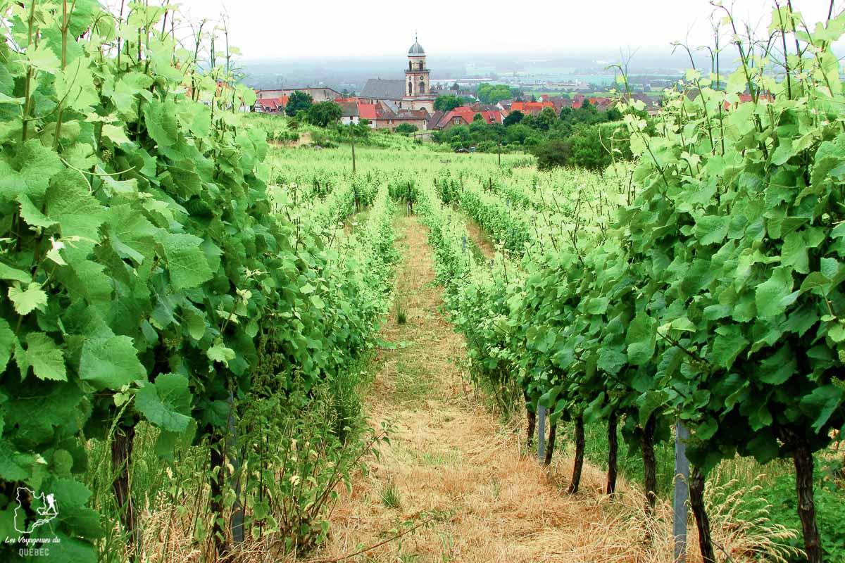 Vignoble à visiter en Alsace près de Strasbourg dans notre article Visiter Strasbourg en Alsace et ses environs en 6 itinéraires d'un jour #strasbourg #alsace #france #voyage