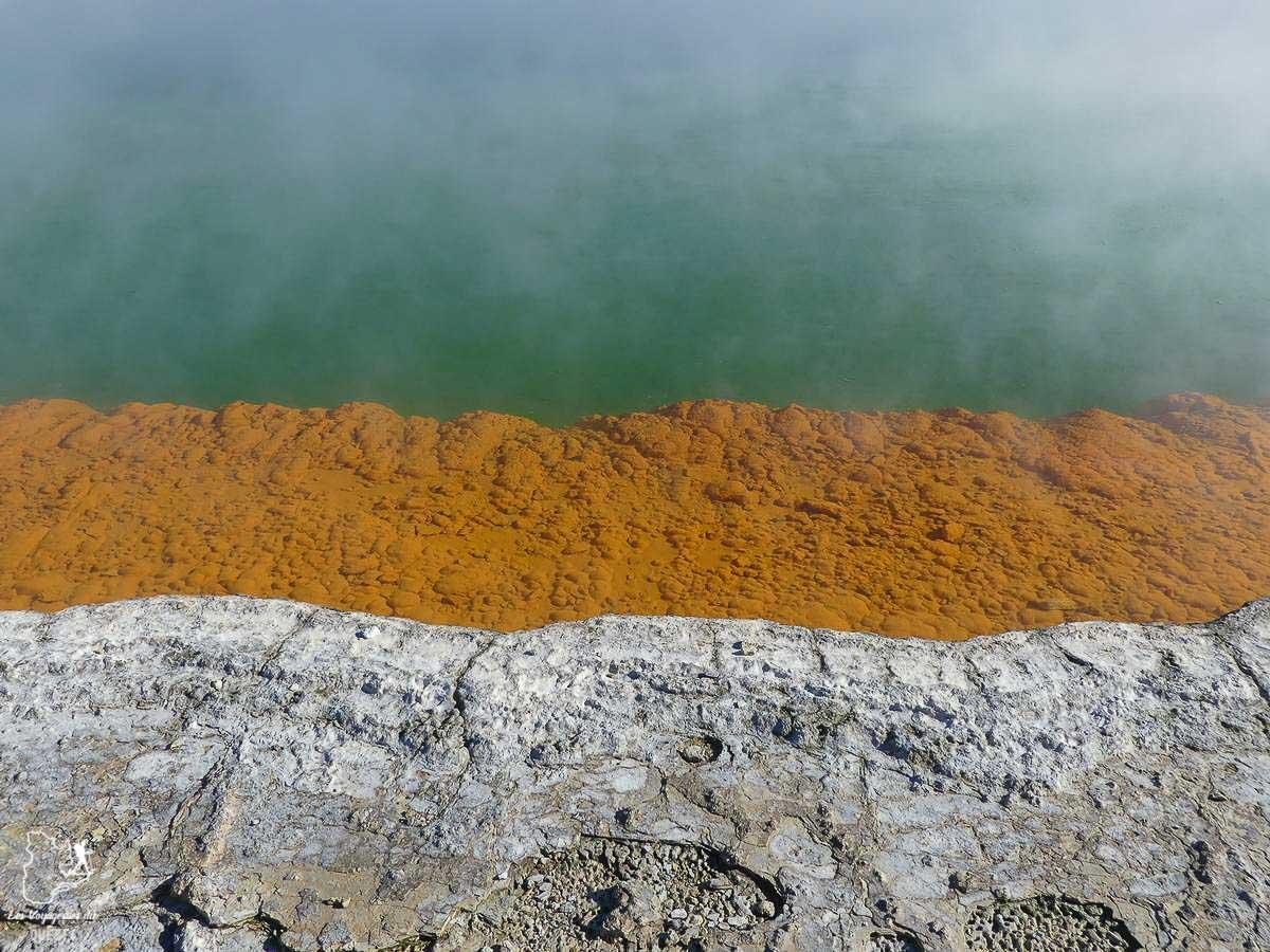 Waiotapu thermal wonderland à Roturua en Nouzelle-Zélande dans notre article Trek en Nouvelle-Zélande : 5 randonnées à faire sur l'île du nord en Nouvelle-Zélande #trek #randonnee #iledunord #nouvellezelande #oceanie #voyage