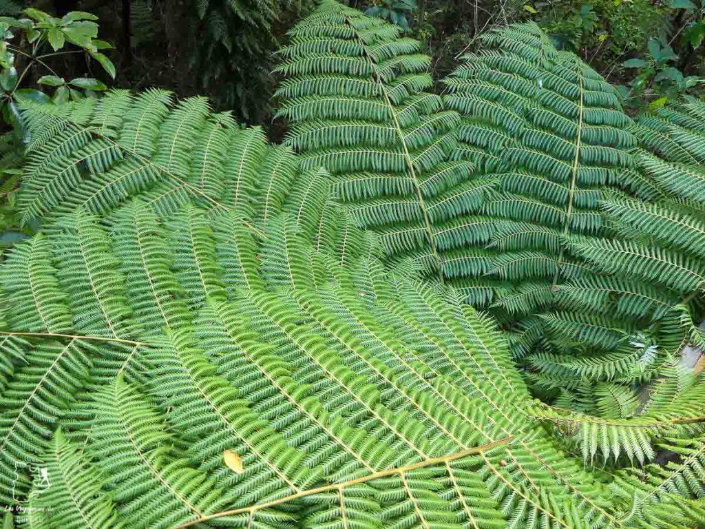 Trek dans la forêt Ruapehu en Nouzelle-Zélande dans notre article Trek en Nouvelle-Zélande : 5 randonnées à faire sur l'île du nord en Nouvelle-Zélande #trek #randonnee #iledunord #nouvellezelande #oceanie #voyage
