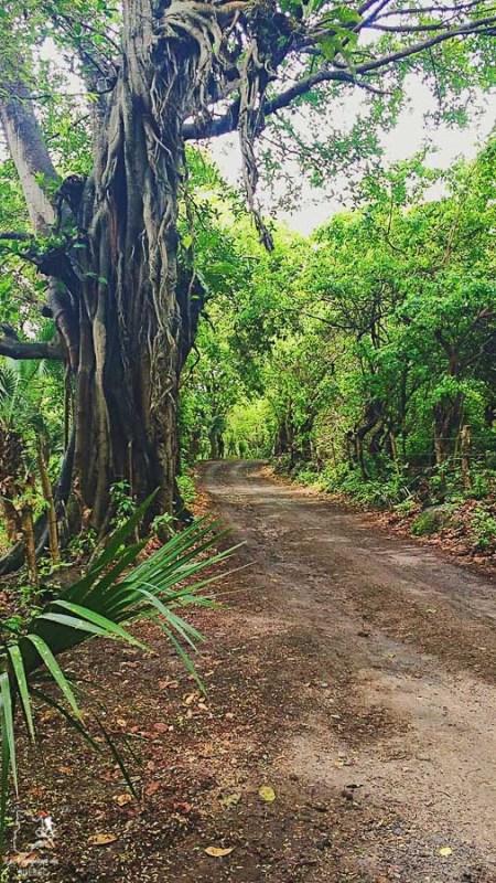 Nature généreuse sur Ometepe au Nicaragua dans notre article Ometepe au Nicaragua : Une semaine sur cette île volcanique #ometepe #ileometepe #nicaragua #ameriquecentrale #voyage