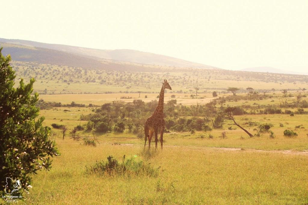 Girafe dans la réserve naturelle du Masaï Mara au Kenya dans notre article Safari au Kenya et en Tanzanie : comment l'organiser et s'y préparer #kenya #tanzanie #safari #afrique #voyage