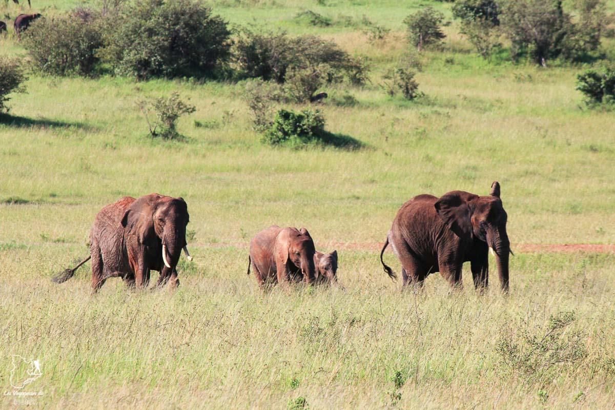 Famille d'éléphants en safari en Tanzanie dans notre article Safari au Kenya et en Tanzanie : comment l'organiser et s'y préparer #kenya #tanzanie #safari #afrique #voyage