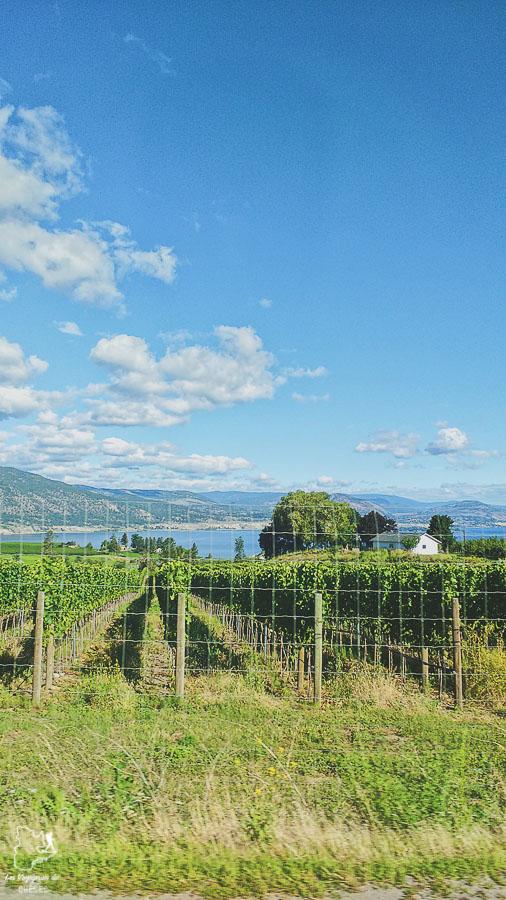 Paysage de vignes de la Vallée de l'Okanagan en Colombie-Britannique dans notre article Road trip vers l'ouest du Canada : mon itinéraire vers la Vallée de l'Okanagan #ouestcanada #ouestcanadien #roadtrip #canada #voyage