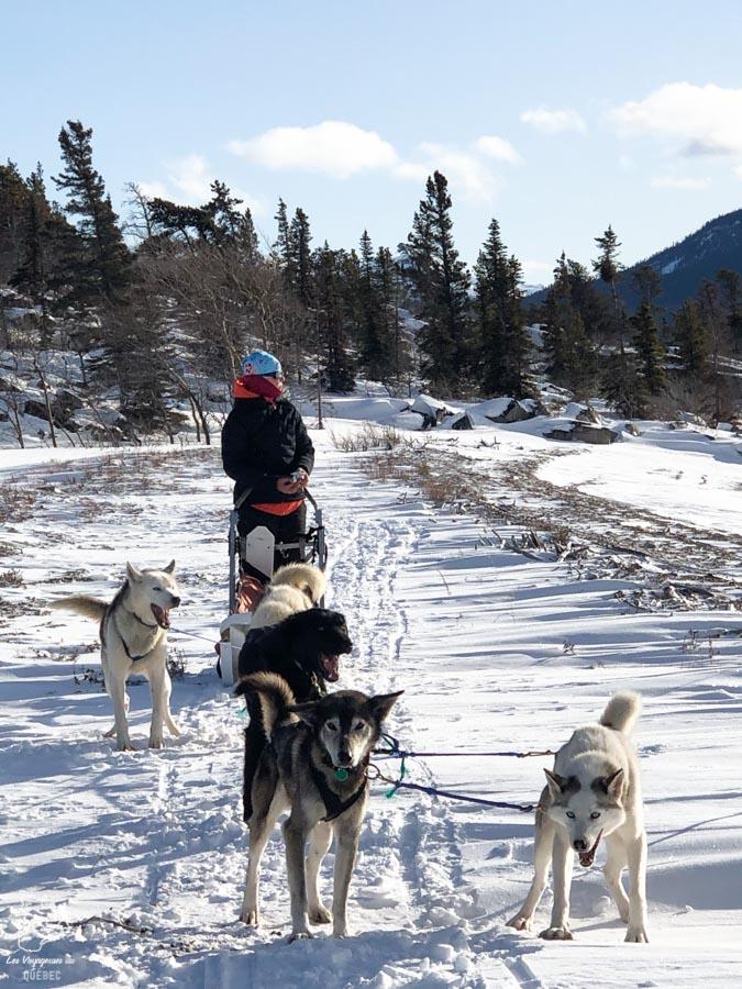 Expédition en traîneau à chien à Car Cross au Yukon dans notre article Visiter le Yukon en hiver : quoi faire au Yukon durant la saison hivernale #yukon #hiver #canada #voyage
