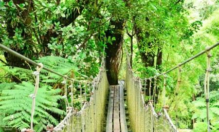 Flore de la Martinique dans notre article Que faire en Martinique : 10 incontournables à visiter sur l'île aux fleurs #martinique #france #caraibes #antilles #amerique #voyage #ile