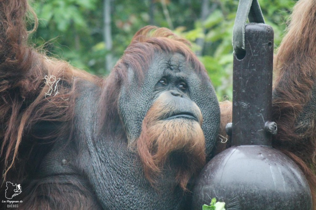 Zoo de San Diego dans notre article Visiter San Diego aux USA : Que voir et que faire à San Diego en 3 jours #sandiego #californie #usa #voyage
