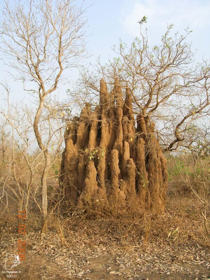 Termitière dans le Parc national de la Pendjari au Bénin en Afrique dans notre article Voyage au Bénin: Le Bénin en Afrique en 8 incontournables à visiter #benin #afrique #voyage
