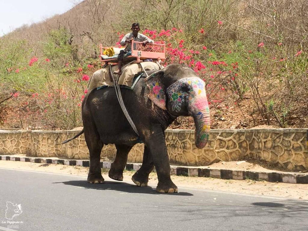 Éléphant à Jaipur dans notre article Visiter le Rajasthan en Inde : Itinéraire et conseils pour un voyage dans cet État du Nord de l'Inde #rajasthan #inde #itineraire #voyage