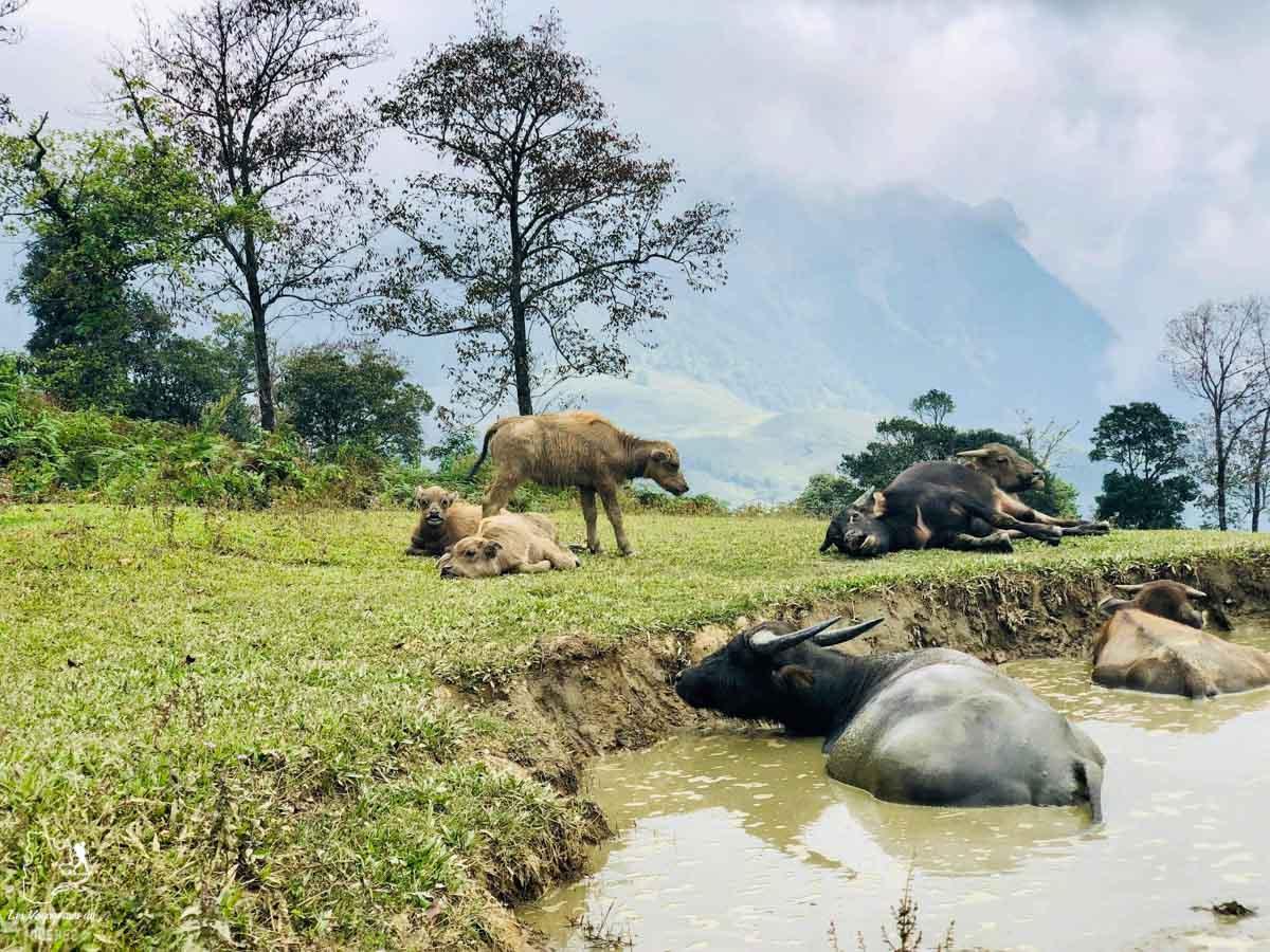 Trek dans les montagnes de Sapa au Vietnam dans notre article Oser partir en voyage au bout du monde malgré des barrières #voyage #oservoyager