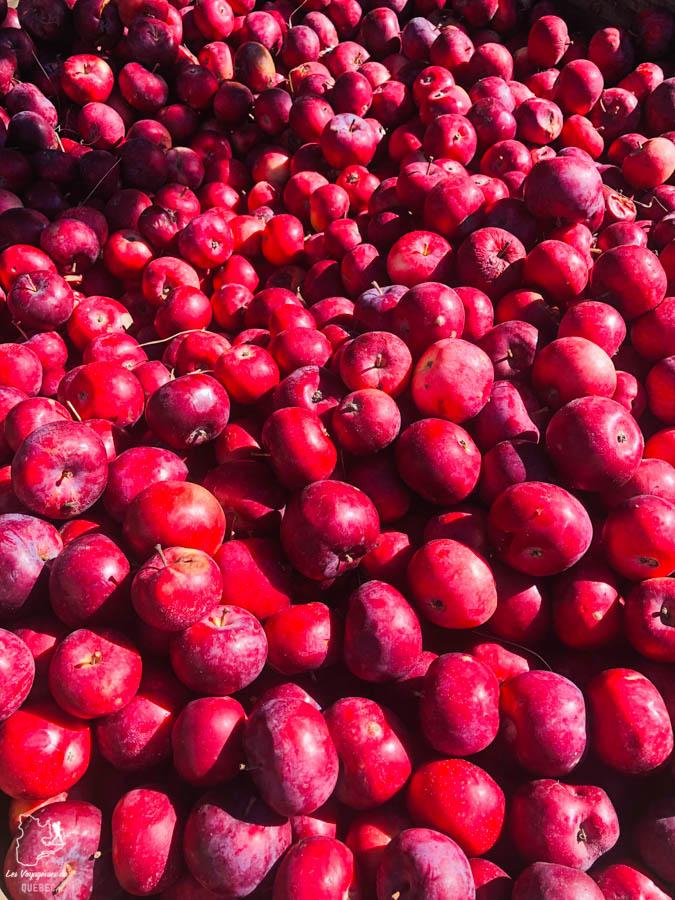 Cueillettes de pommes à la Fromagerie du verger à Saint-Joseph-du-Lac dans les Basses-Laurentides dans notre article Road trip au Québec: 15 road trips thématiques à moins de 2h de Montréal #roadtrip #quebec #itineraire