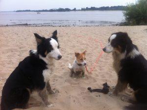 Drei-hunde-Spaziergang3
