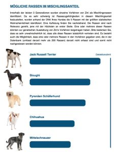 Hunde DNA Test6