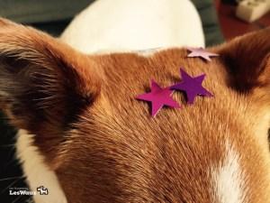 Pixie-Sterne