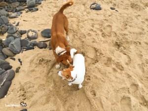 Hund-Pixie-am-Strand-Port3