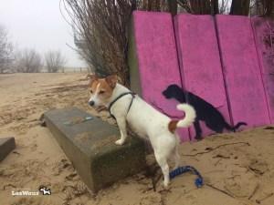 Hund-Spaziergang-Elbe2