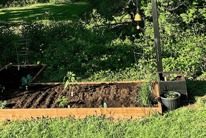 Mon jardin en 2020