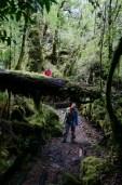 Dans la forêt luxuriante