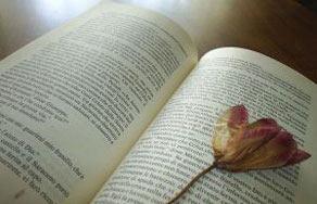 letteratura_libriefiori