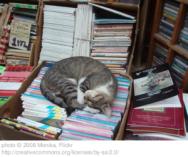 gatto-e-libri