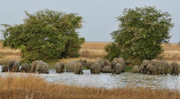 Elephants in Cameroon