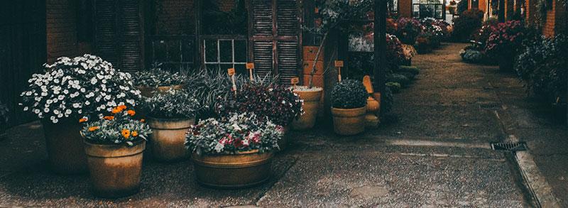 les meilleurs pots de fleurs xxl test