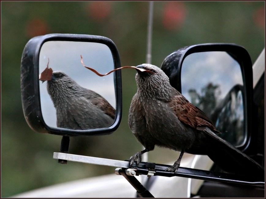 Cheeky-Aposle-Bird2
