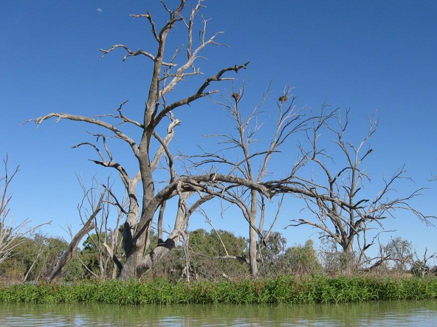 Trees-On-Lake-Wetherill2