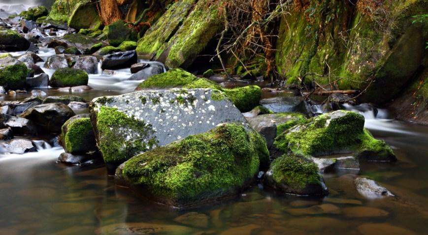 Mossy-Rocks