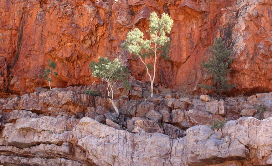 Ormiston-Gorge-Cliff-and-trees