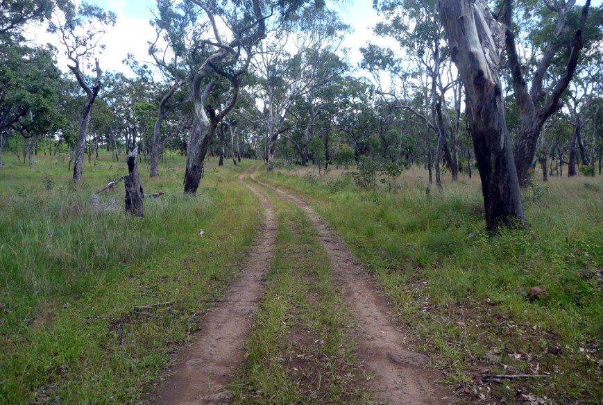 Mahogany-Forest