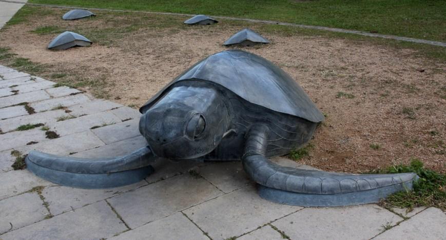 Thursday-Island-turtles