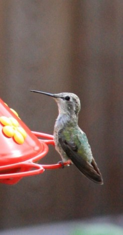 Up close and personal time with a hummingbird!