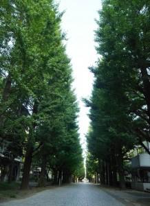 20150814東大銀杏並木