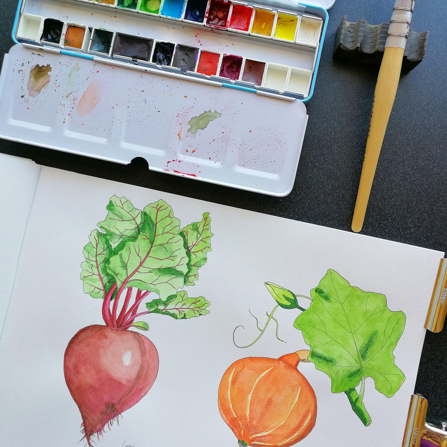 dārzeņu ilustrācijas