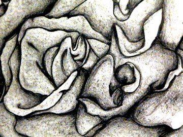 Graphite Flower was drawn by Letitia Pfinder