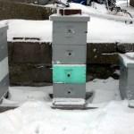 Hive Site 01