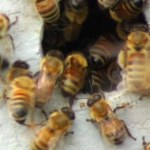 2012-07-24 Bee 19 1202 holes