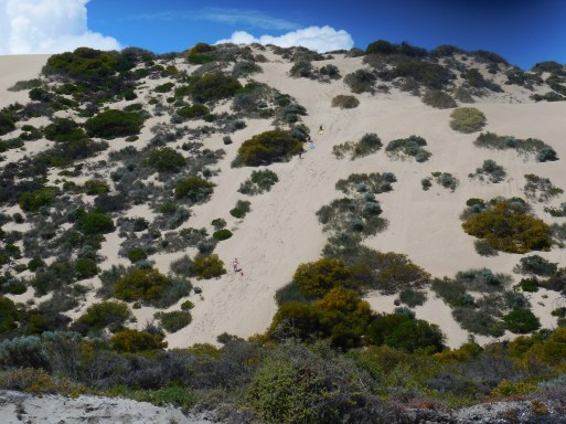 little-bay-sand-dune