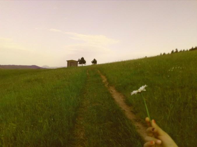 Obećaj mi, Cvetana