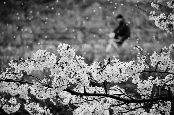 prolećna pesma