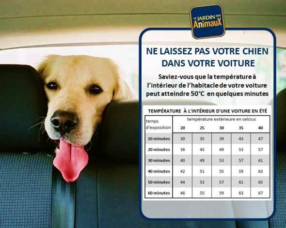 Le coup de chaleur est mortel pour le chien l 39 etoile des bergers - Coup de chaleur chat symptomes ...