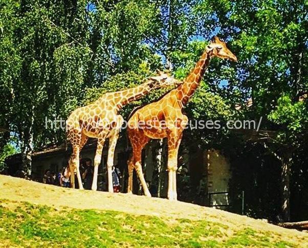 Zoo de Beauval par Ma Page à Moi… Article bloggeuse Invitée